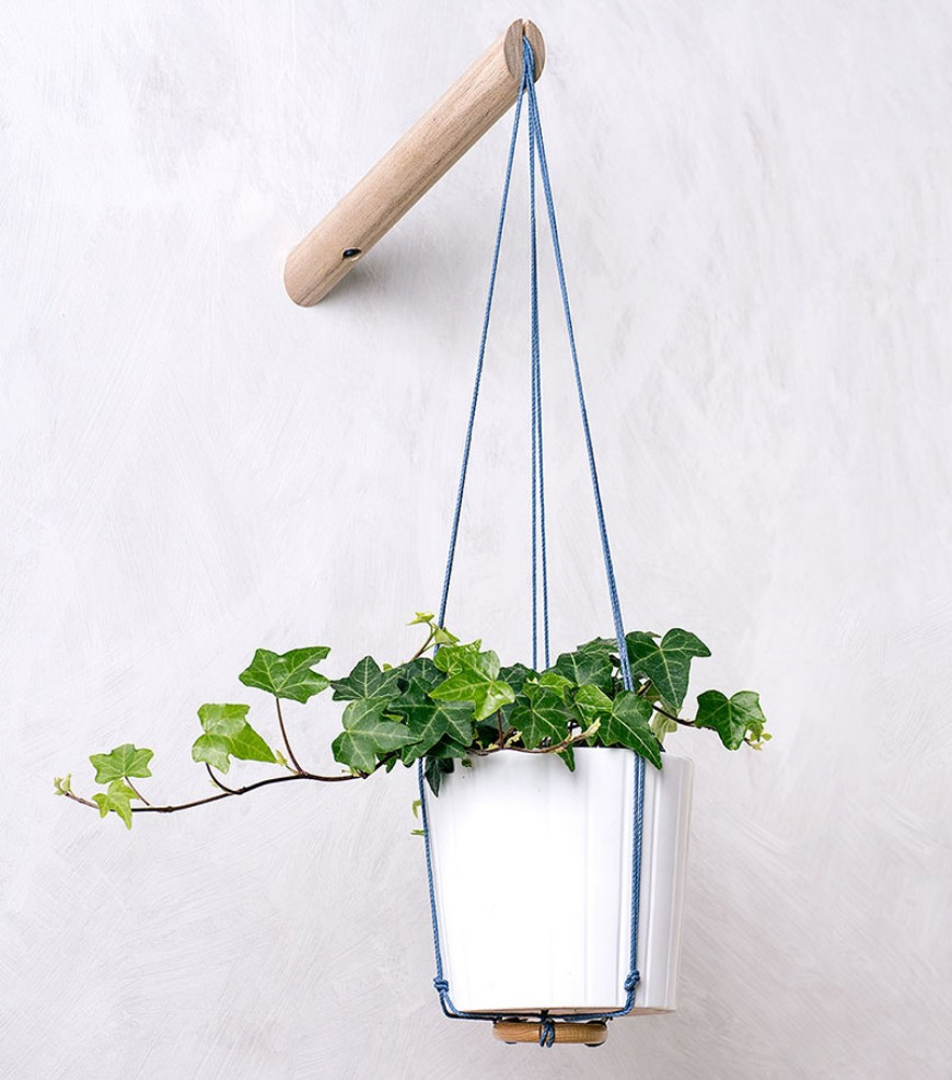 How To Include Indoor Vines In Modern Home Decor
